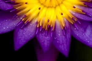 Life Purpose Blossoming